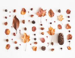 favoris d'automne