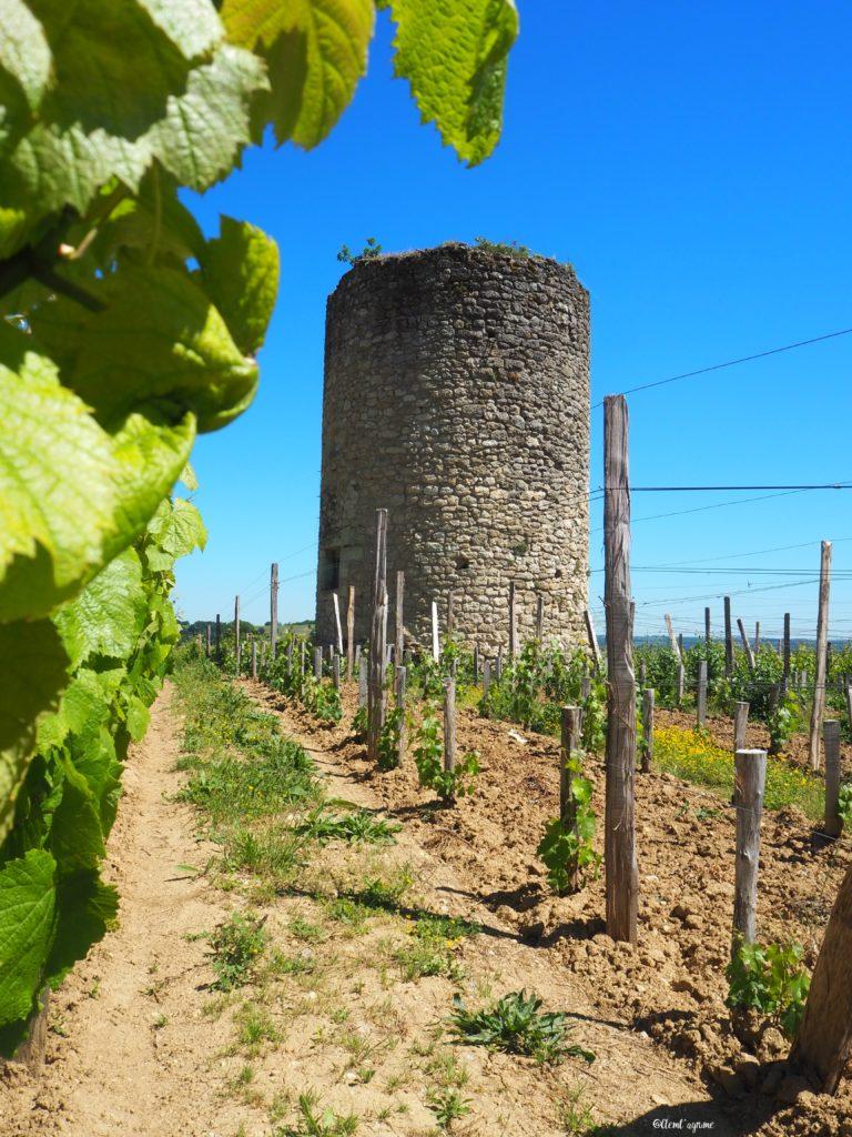 vignobles Saint-Emilion